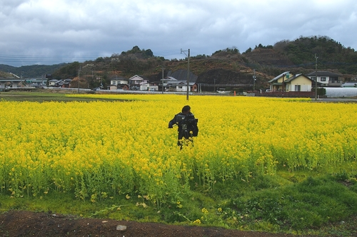 260208 松島オルレ14