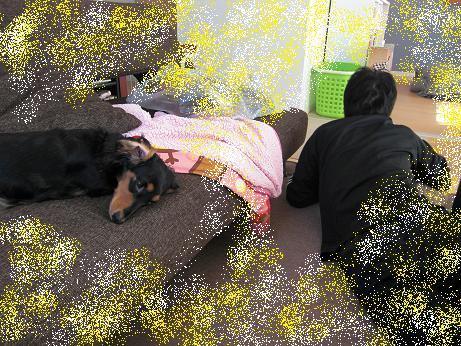 2011_1027_123149-CIMG0666.jpg
