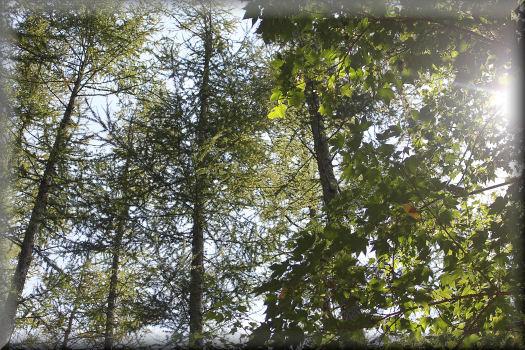 木漏れ日が