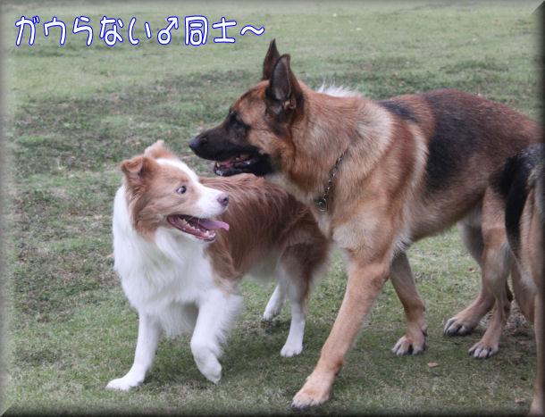 ガウらない♂同士