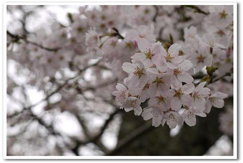 12.4.16 宇陀の桜ツーリング (10)