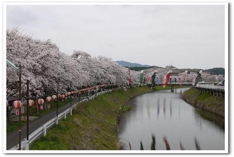 12.4.16 宇陀の桜ツーリング (8)