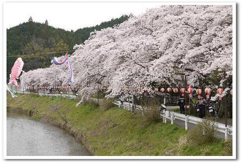 12.4.16 宇陀の桜ツーリング (11)