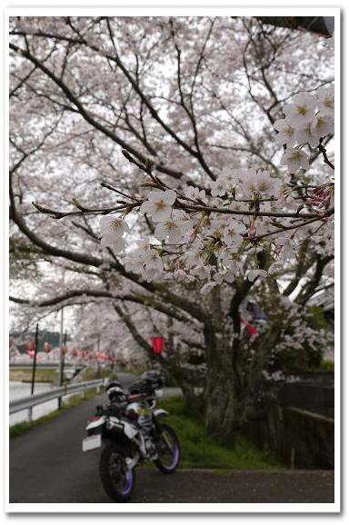 12.4.16 宇陀の桜ツーリング (12)