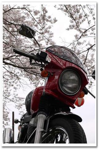 12.4.16 宇陀の桜ツーリング (14)