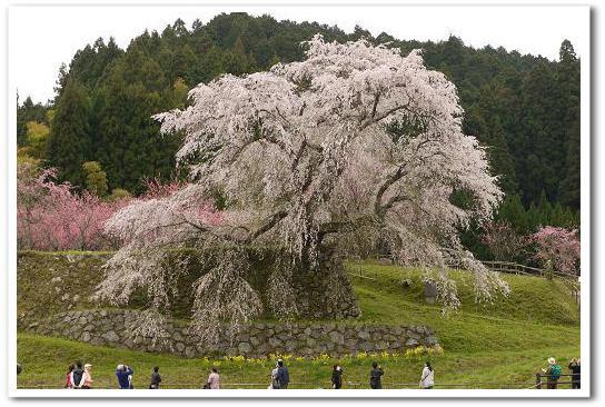 12.4.16 宇陀の桜ツーリング (21)