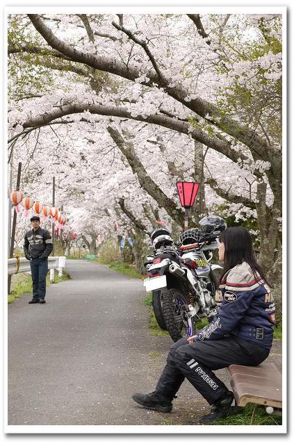 12.4.16 宇陀の桜ツーリング (23)