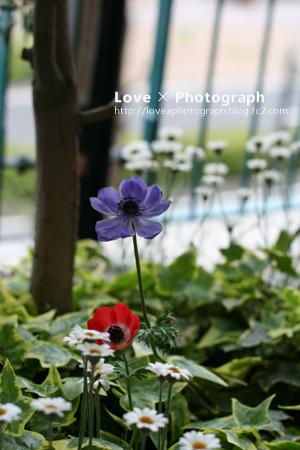 IMG_68091.jpg