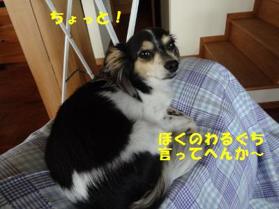 DSC02712a.jpg