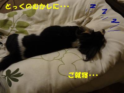 DSC02719a.jpg