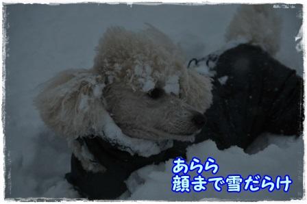 顔まで雪ダラケノコテ