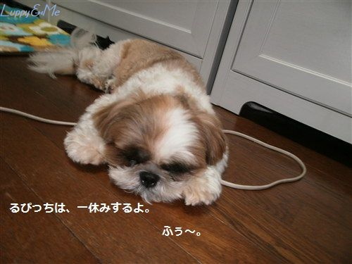 ふぅ。遊び疲れたよ