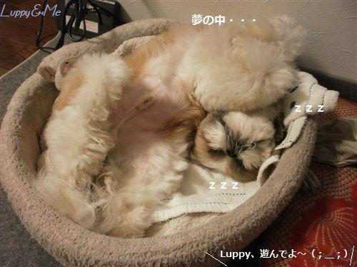 爆睡Luppy