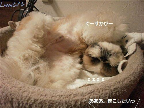 爆睡Luppy2