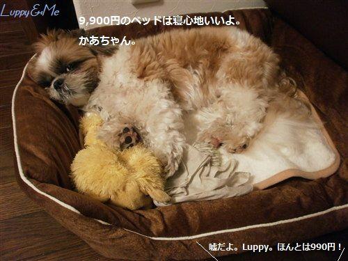 おやすみなさいzzzzz