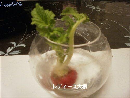 レディース大根の葉♪