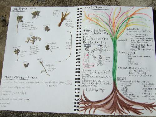 【縮小】薬草カレンダー