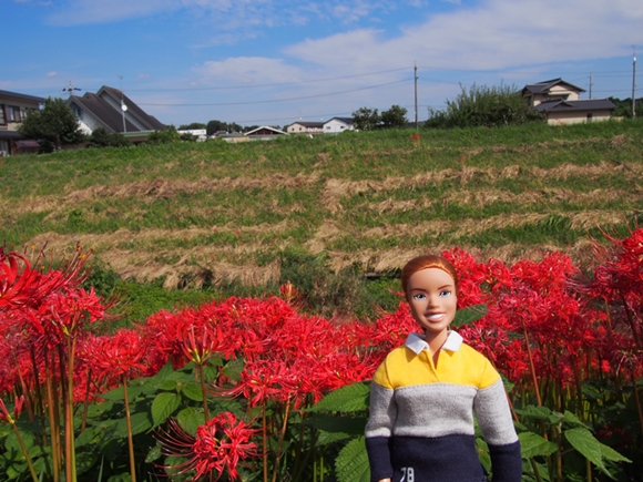kakegawa-20140921-02s.jpg