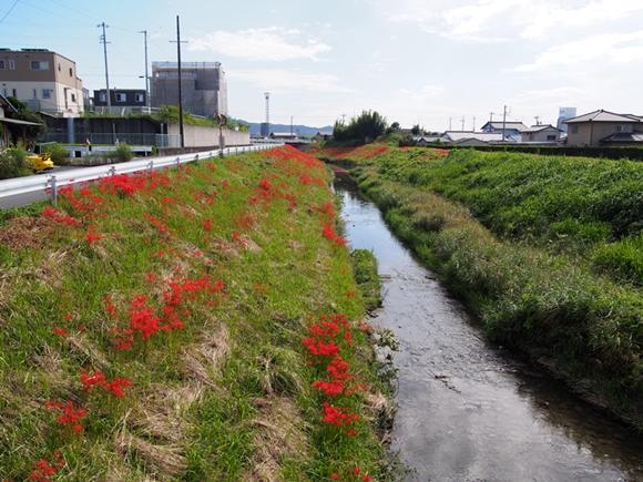 kakegawa-20140921-12s.jpg