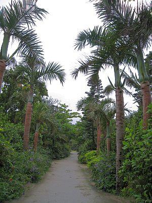 由布島植物園.jpg