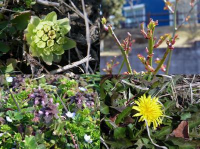春の四_convert_20130308231832