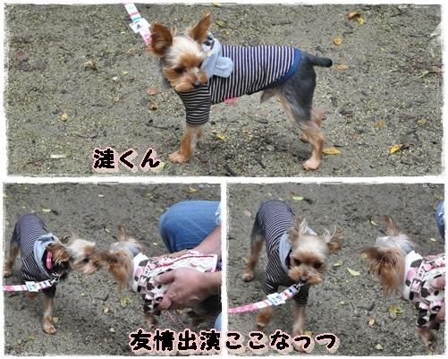 12_20111101074848.jpg