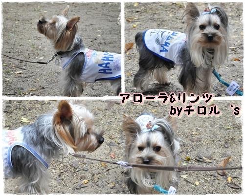 13_20111101213518.jpg
