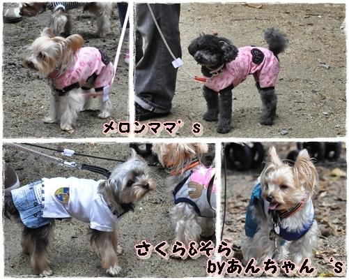 16_20111101213516.jpg