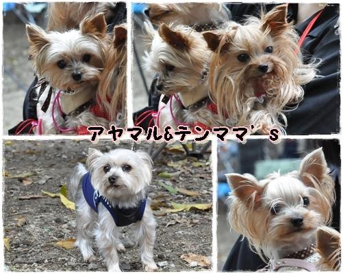 2_20111101074544.jpg