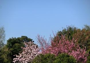 桜かなぁ・・・