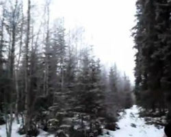 Strange sound emanates from Swedish forest