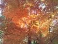 DSC_0020_2013120110283444c.jpg