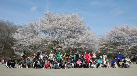 2012お花見コンペ集合写真