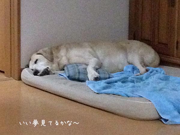 bed_201402102119545a4.jpg