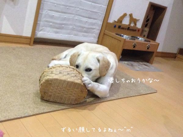 kago_201402222137509d8.jpg