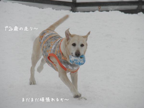 maruhasiru_20140216212813402.jpg