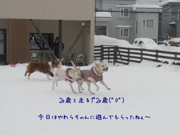 maruyawara_201402092043543e6.jpg
