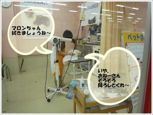 20120306_2.jpg