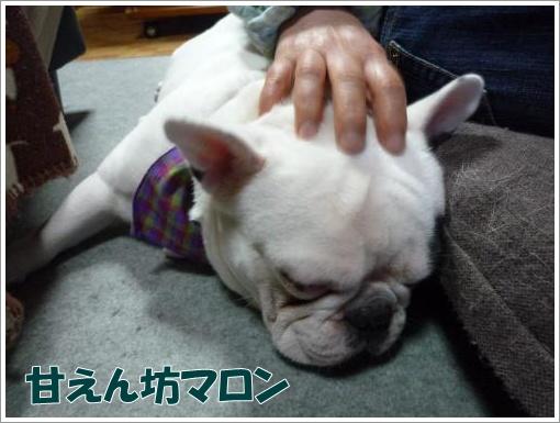 20120308_1.jpg
