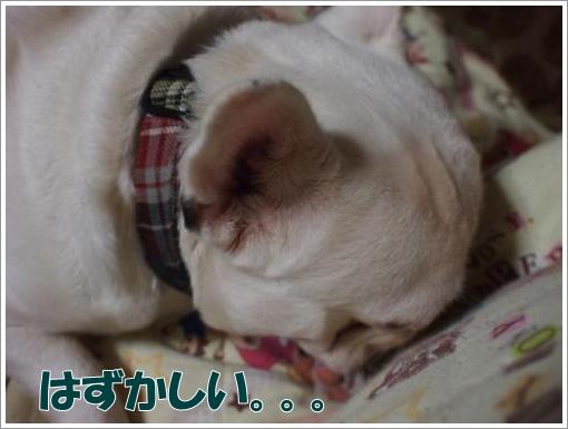 20120330_5.jpg