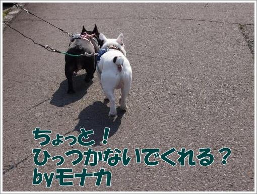 20120407_2.jpg