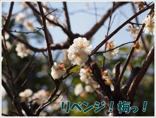 20120407_7.jpg