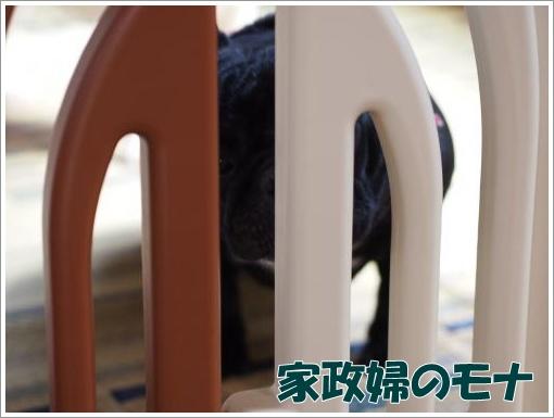 20120408_2.jpg