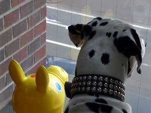 まーちんのブログ-窓からの眺め2