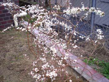 まーちんのブログ-花壇2
