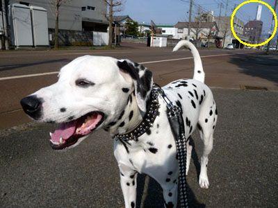 まーちんのブログ-散歩
