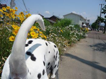 まーちんのブログ-尻尾1