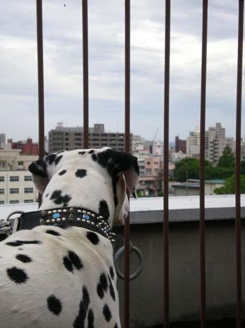 まーちんのブログ-屋上からの眺め