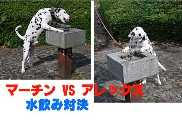 まーちんのブログ-水飲み対決