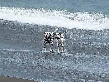 まーちんのブログ-海